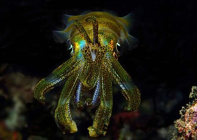 another-reef-squid