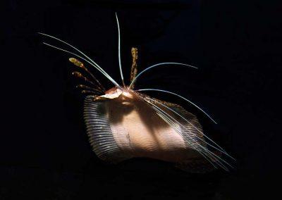 cockatoo-flounder