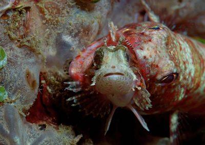 lizardfish-with-prey